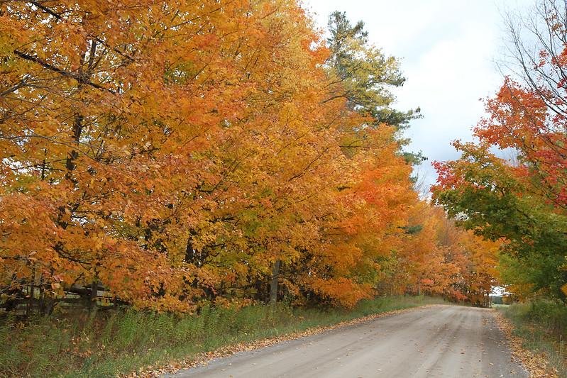 Autumn drive52