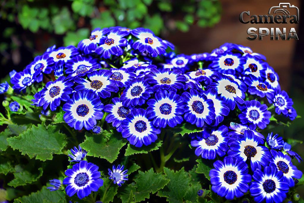 Flor 036