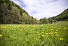 landscape of Jura mountain with blooming green meadow, Switzerland by CloudMineAmsterdam