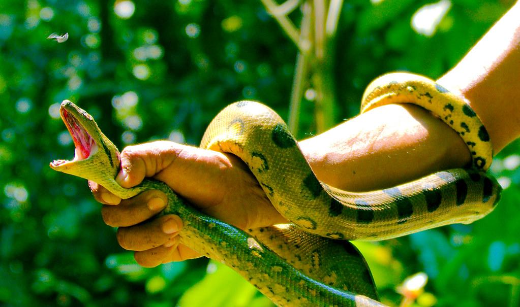 Snake_17_v2