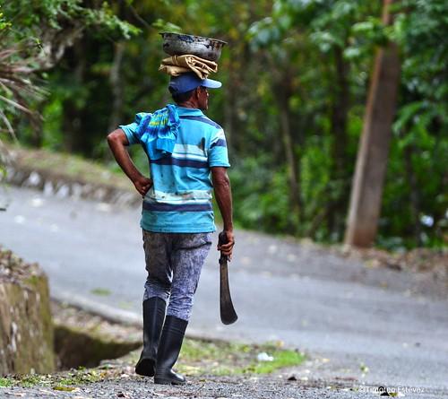 Hombre de campo dominicano