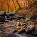 sliding autumn by alexandratsuruta