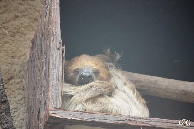 Besuch Zoo Rostock 13.12.201591