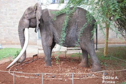 Afrika_Kenia_07_Nairobi_National_Museum_Dez_2015 _040