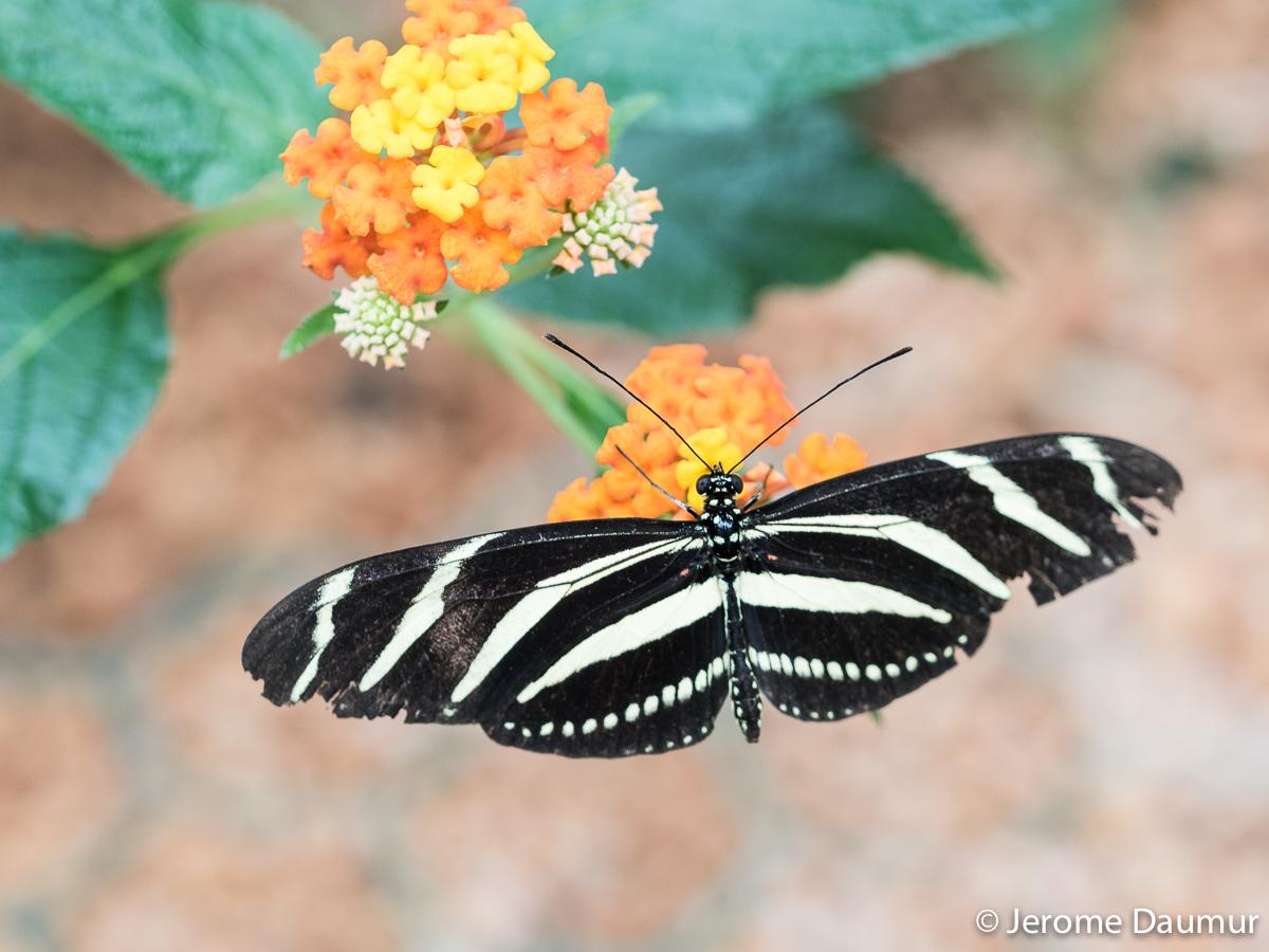 Butterflies Garden 2