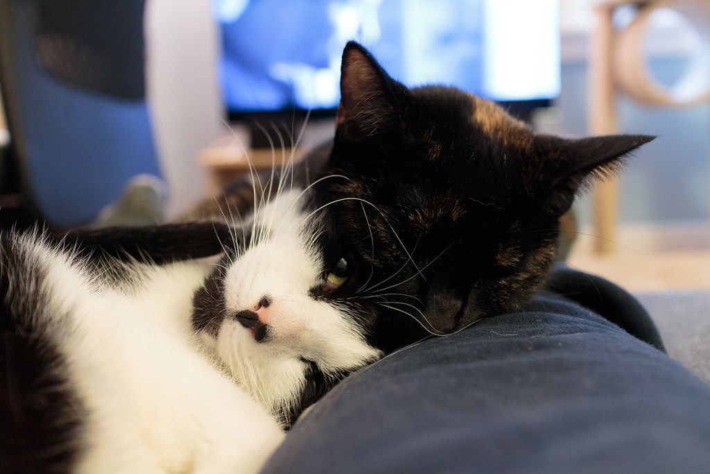 Our cats Boo and Trixie sleep with their heads together