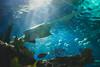 Sawfish by akibamir9