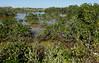 Roadside Mangrove Swamp by cowyeow