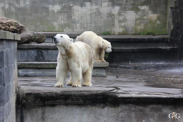 Zoo Rostock 19.09.201526
