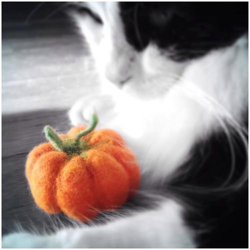 September 22 - Orange