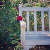 Bench, rose, 11/12/15