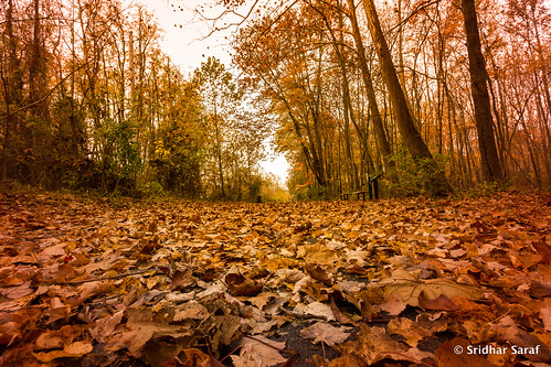 autumn usa fall photography md unitedstates unitedstatesofamerica maryland 2015 owingsmills fallphotography marylandphotography trailphotography sridharsaraf untedstatesphotography redrunstreamvalleytrail owingsmillsphotography redrunstreamvalleytrailphotography
