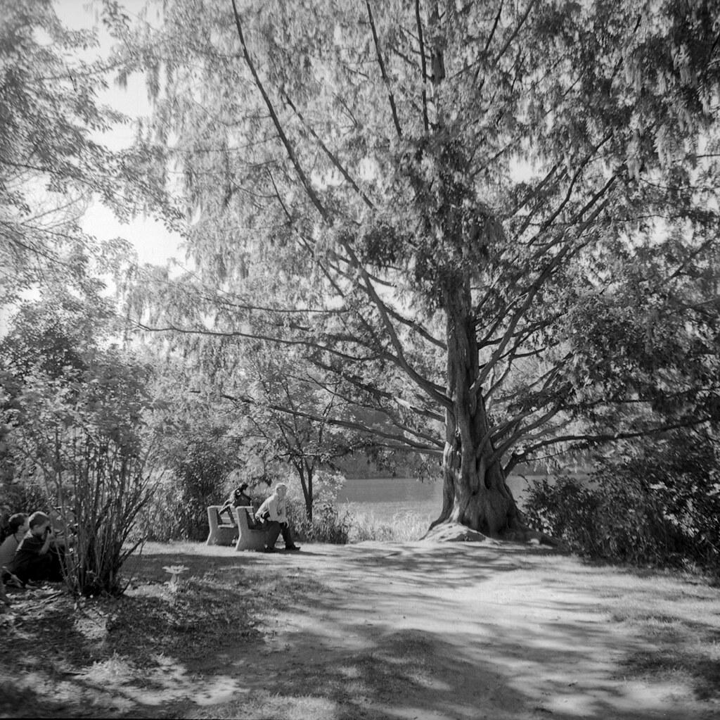 High Park Tree