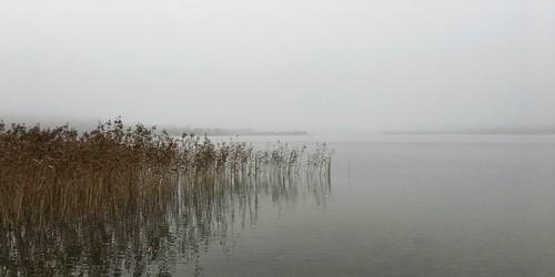 snapseed water lakeview lake mistymorning morning misty mist knudsø østjylland denmark