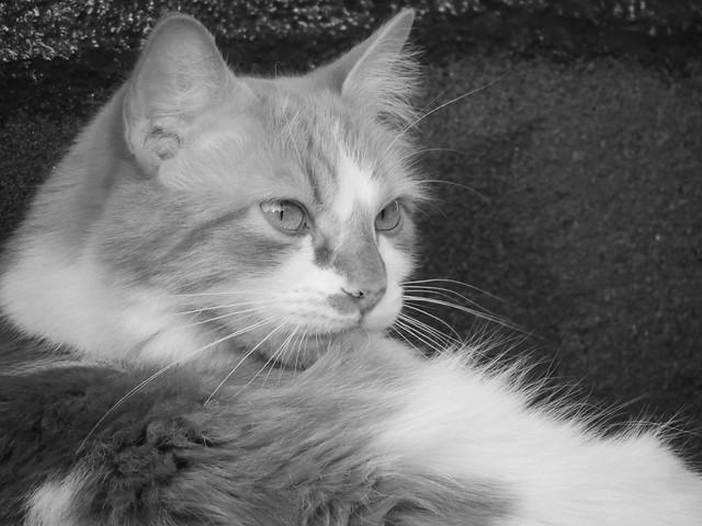 Penelope, Nikon COOLPIX P510