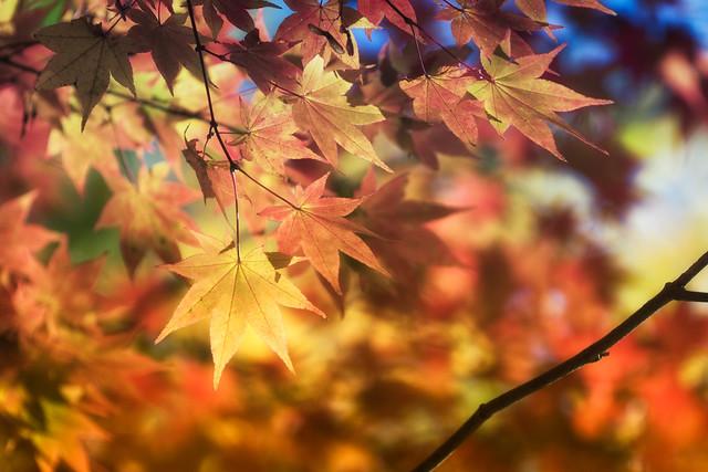 Fall Performance