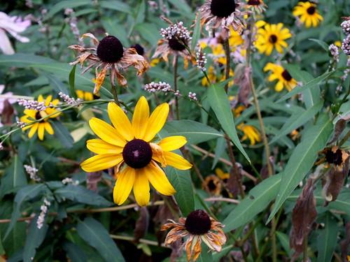 wildflowers decay