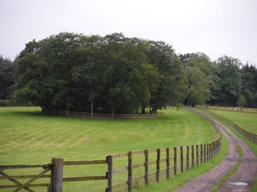 Clump near Fonthill House
