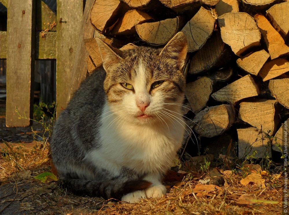 20150830_komarovo_cat_005