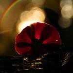 21. August 2015 - 17:30 - An einem Abend habe ich mir eine Blumenblüte genommen und sie an unterschiedlichen Orten bei sinkender Sonne im Wald fotografiert... Es werden also mehr solcher Fotos kommen... :)  Meastro on Youtube: www.youtube.com/channel/UCz1p_WgQ23DPHjEfXH8mmYQ Meastro on Facebook: www.facebook.com/Meastrop?ref=bookmarks