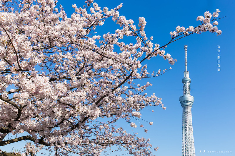 【4月 春】東京 晴空塔