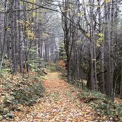 Post-fall foliage in the Catskills