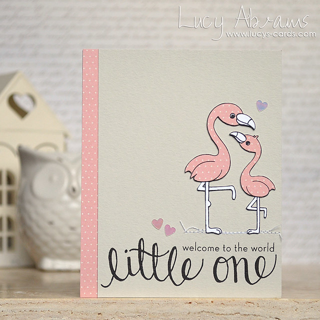 Baby Flamingo by Lucy Abrams