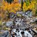 Bishop Creek in the Sierra Nevada Mountains, California. by Randall R. Howard