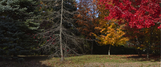 fall foliage at 22 Parker Rd (2015)