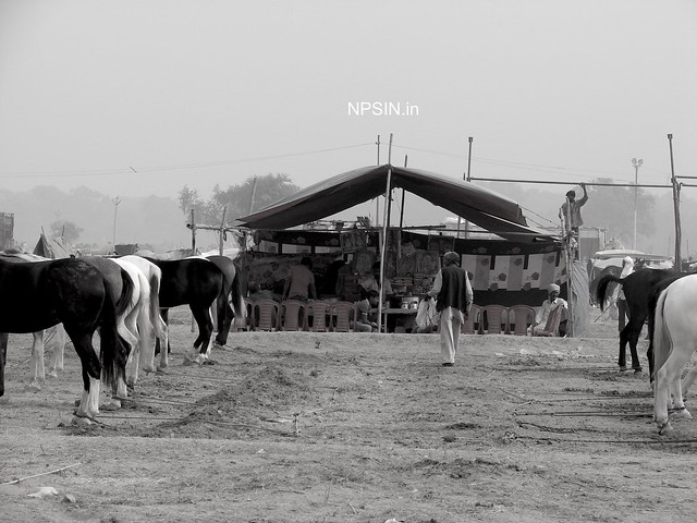 Animal Fair: Horse Fair: All parties are ready :)