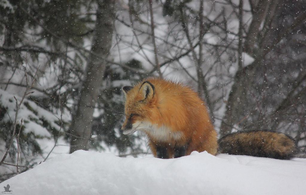 No more snow, I've had enough!