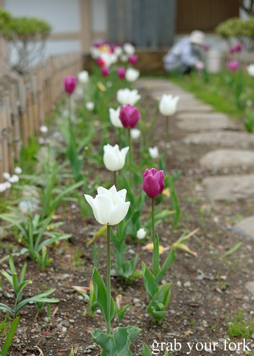 Tulips at Matsumae Castle in Hokkaido, Japan