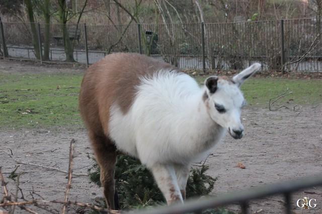 Besuch Zoo Rostock 29.12.201565