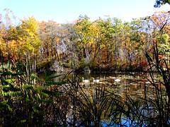 Mill Pond Park -- Autumn (27)