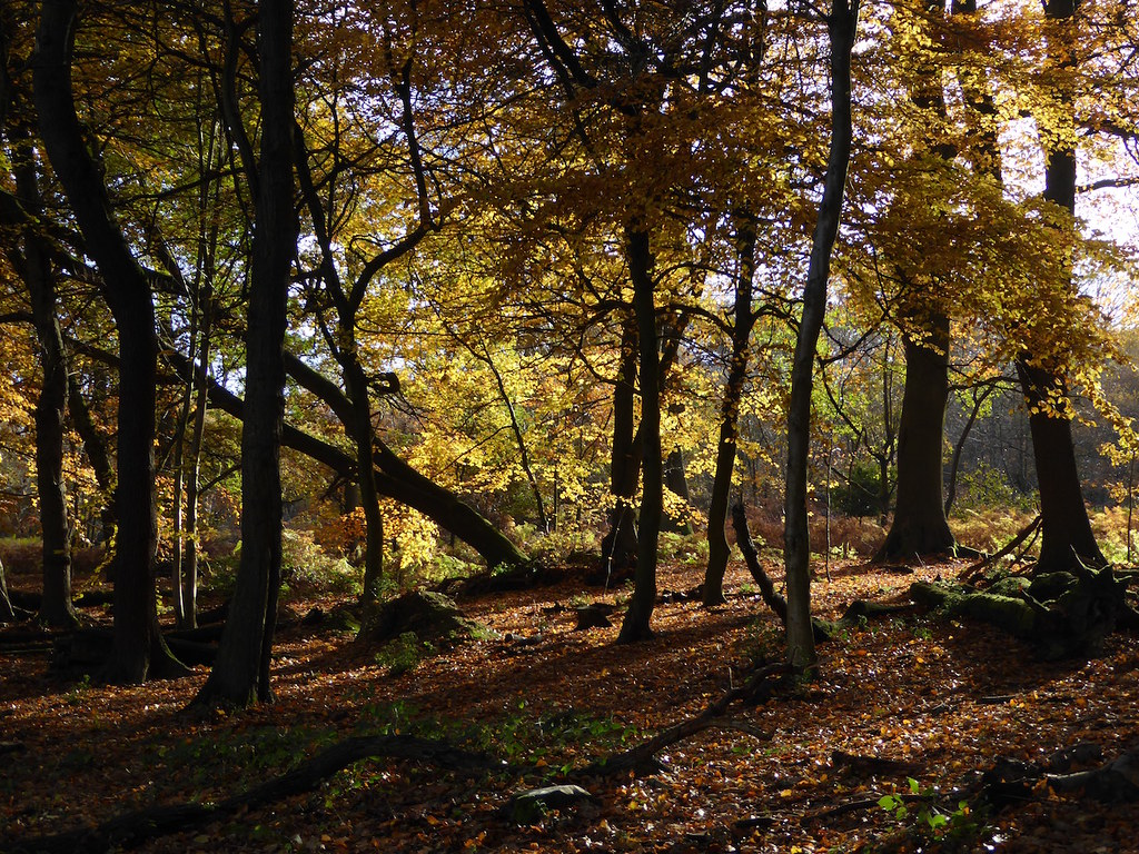 Beeches near Oxted Oxted Circular walk