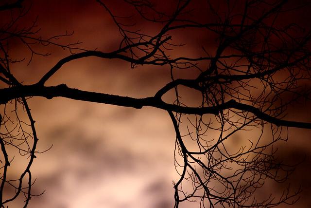 IMG_6171 Branch