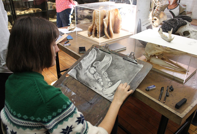Charcoal Drawings of Bones