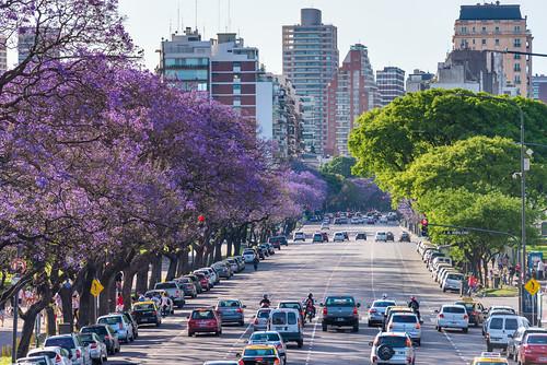 Jacaranda Trees Blooming, Avenida Presidente Figueroa Alcorta, Buenos Aires, Argentina