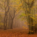 Autumn Luster by Damian_Ward