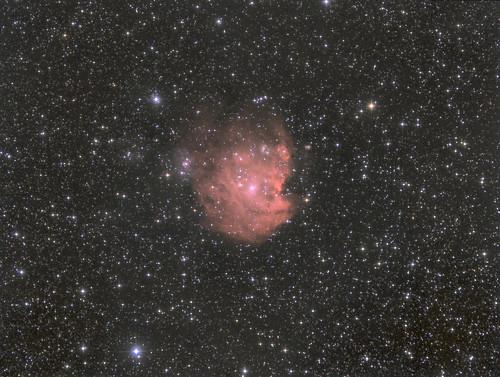 Monkey Head Nebula  NGC2174