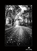 Autumn Road in Black and White by Jim Crotty