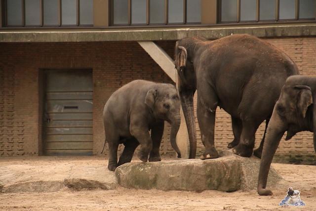 Zoo Berlin 06.12.2015    0131