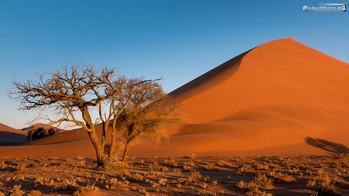 16x9 abendlicht africa afrika dune40 dünen hardap kameldorn namib namibnaukluftnationalpark namibia sandwüste sonnenuntergang tsauchabvalley vachelliaerioloba wüste desert eveninglight sanddesert sunset dã¼nen sandwã¼ste wã¼ste hardapregion