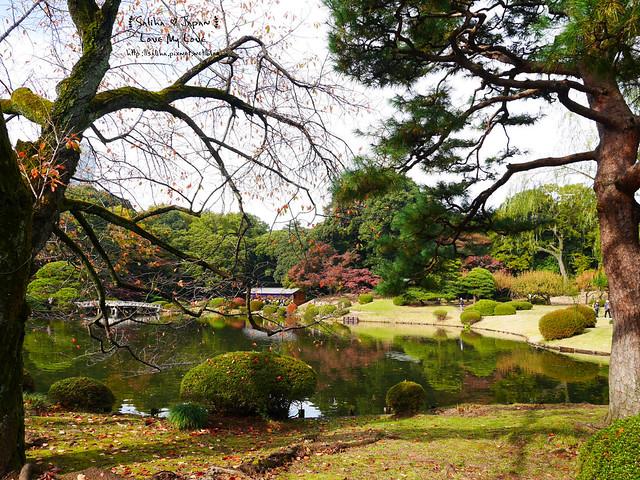 日本東京自由行新宿御苑庭園景點 (15)