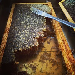 Honeycomb Tasting at Parco dell'Etna #sicily…