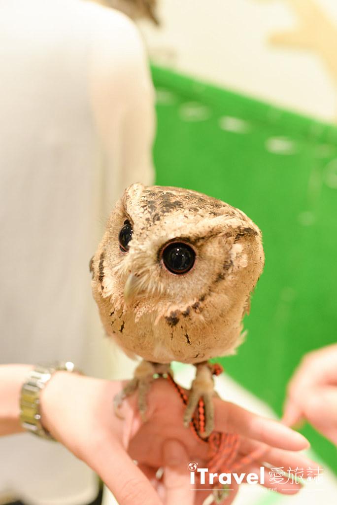 《福冈景点推荐》OWL Family 猫头鹰咖啡店:教你在线预订与萌萌小家伙的约会。