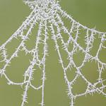 Broken Cobweb 16-12-01