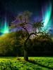 Composing Tree in the Dark