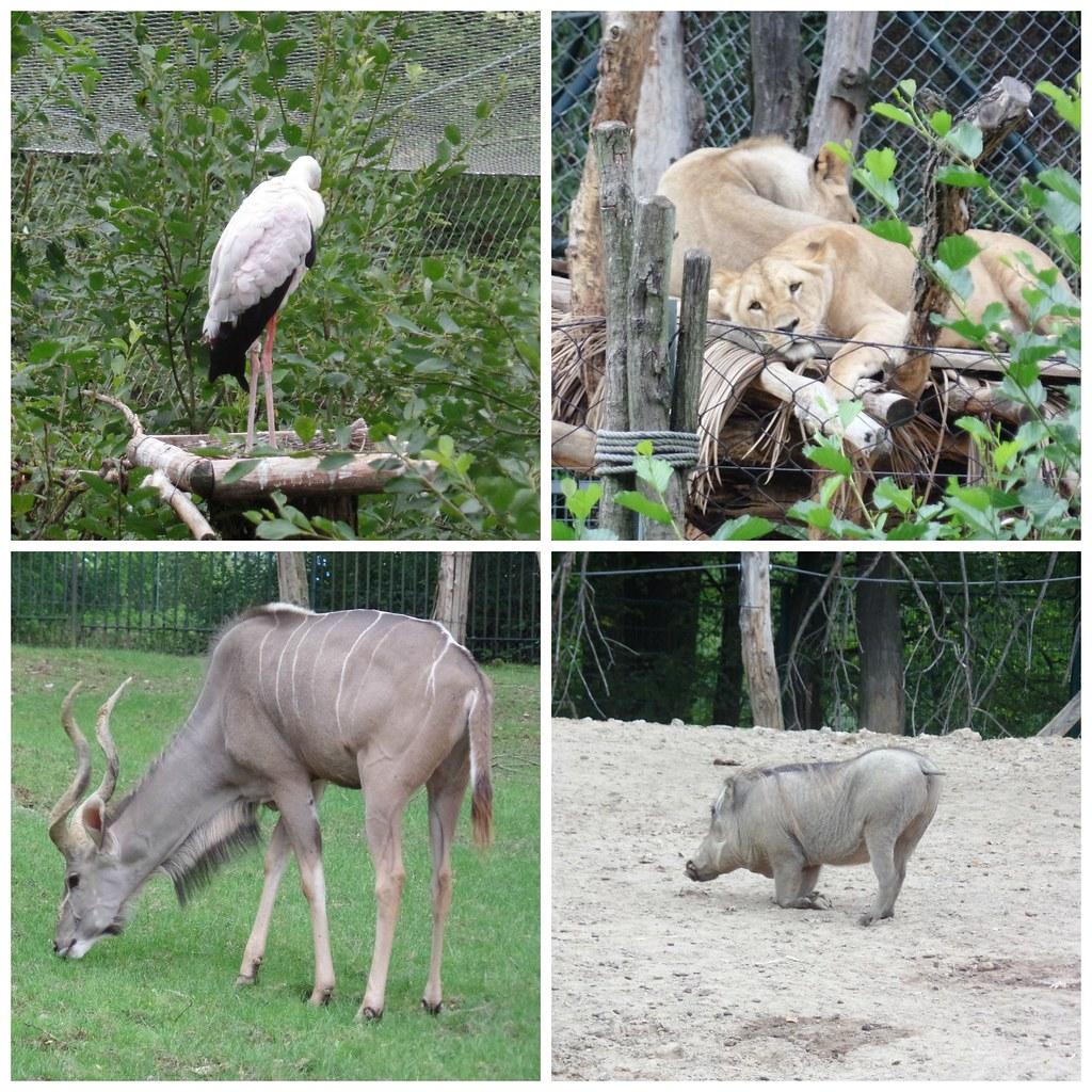 zoo_zlin