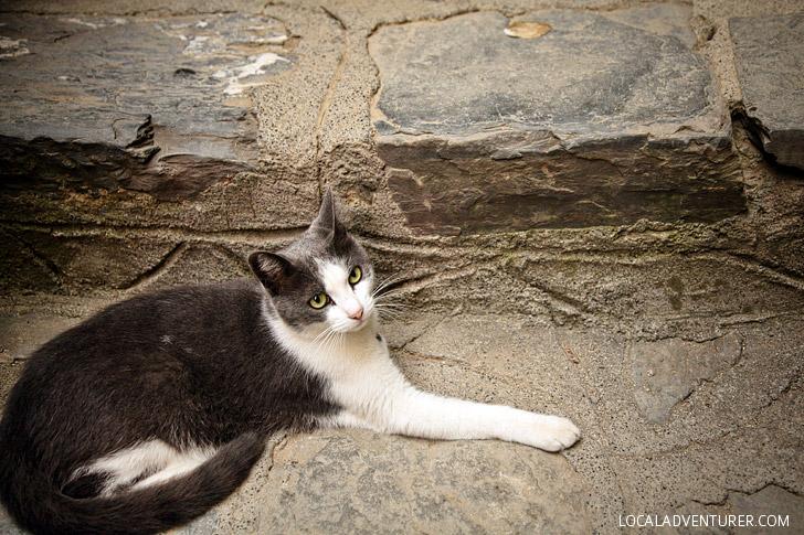 Cats of Cinque Terra.